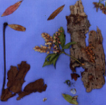 Burnaby Mountain