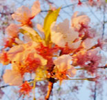 Under the Cherry Blossom Tree, art book/mural.pdf