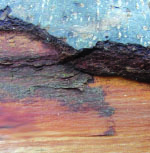 A Tree Along  a Poem on the Shore (mural book, pdf
